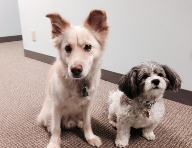 Bentley and Gracie